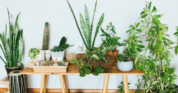 No, las plantas no limpian el aire de tu casa: necesitarías entre 10 y 1.000 por m²