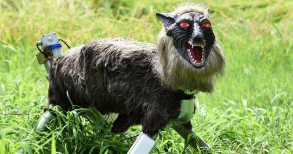 En una ciudad japonesa usan este espeluznante lobo-robot para ahuyentar a los osos
